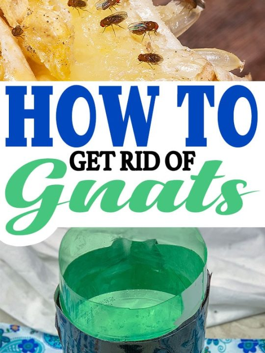 How To Get Rid Of Gnats and Fruit Flies